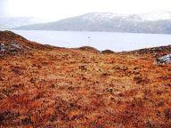 Peat Bog, Isle of Lewis(source: Wikipedia)