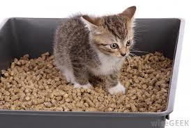 The kitty litter...not the kitty