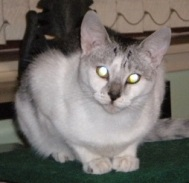 Tuppence - she's worth a lot! Laser eyes don't come cheap...