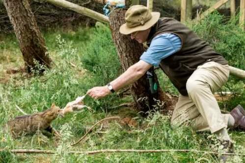 John Lister-Kaye feeding a wildcat