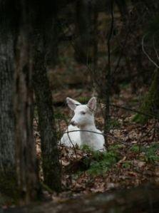 white-doe-2
